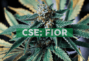 Fiore Cannabis Announces Positive Adjusted EBITDA and Successful Organic Cannabis Crop Results for January